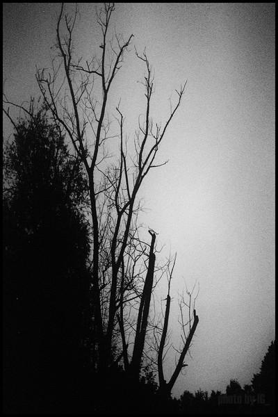 twilight turin