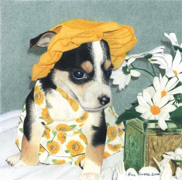 Daisy-Mae Dawg