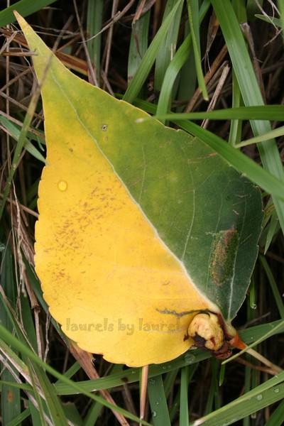 Leaf in Halftones