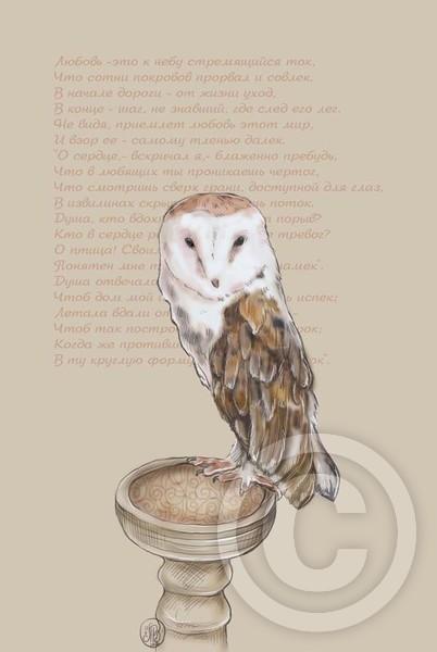 Rumi - love bird