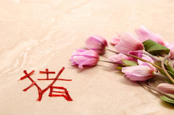 Pig chinese new year