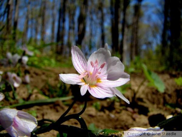 Spring 955