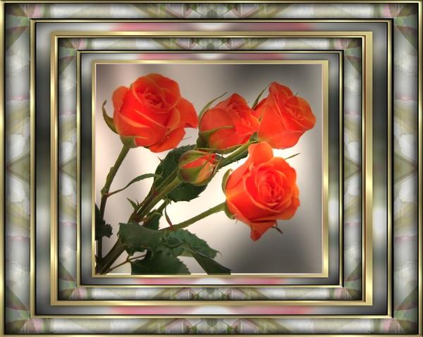 double framed roses