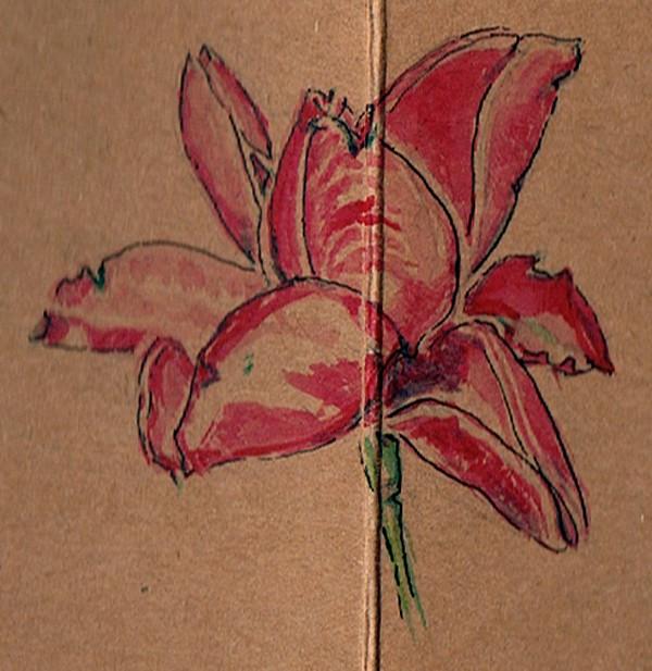 Crocus Watercolor