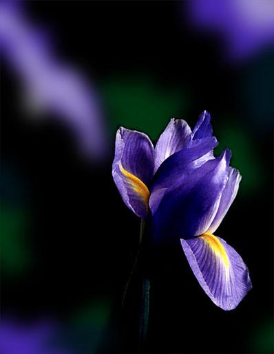 Iris Shadows