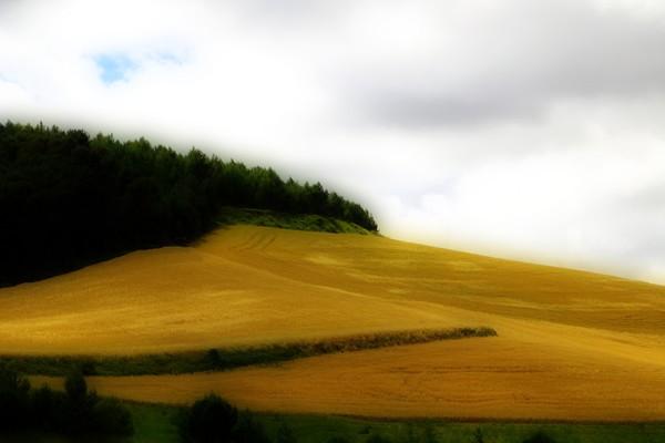 Wheatfield in France-0989