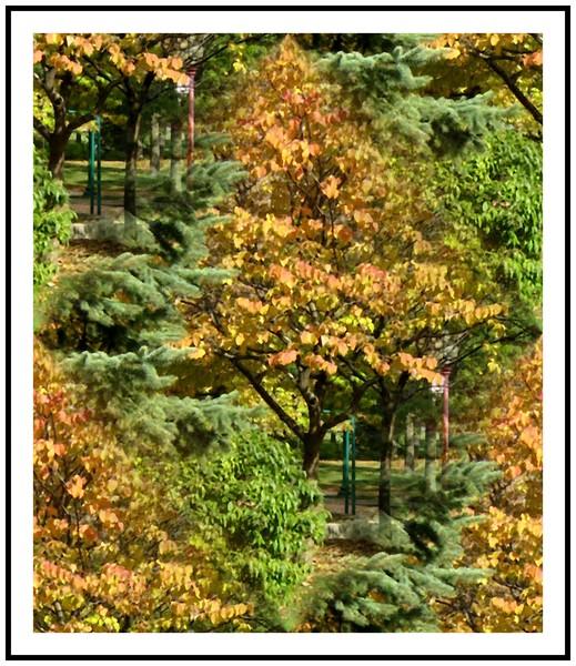 Autumn In The Park (Seventeen)