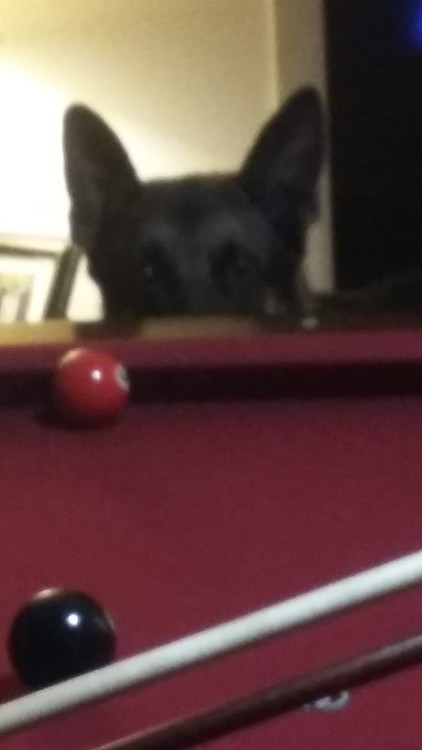 REBEL WANTS TO PLAY TOO