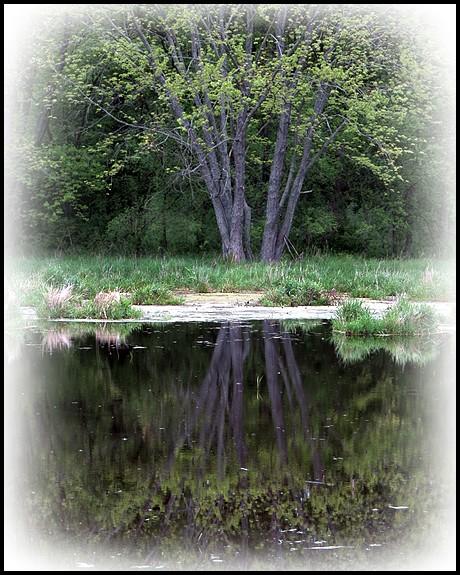 A Reflective Morning