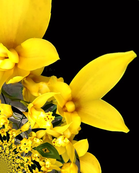 Focus On The Yellow Flowers (Two)