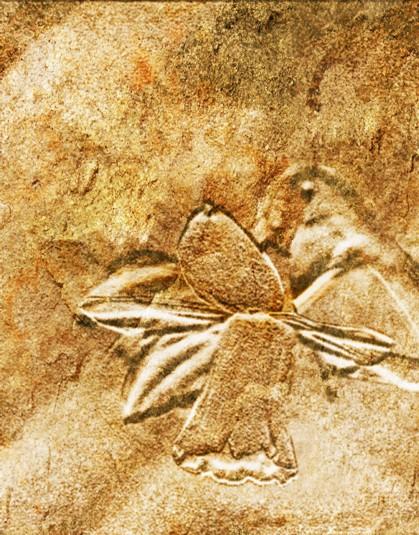 Fossil Daffodil