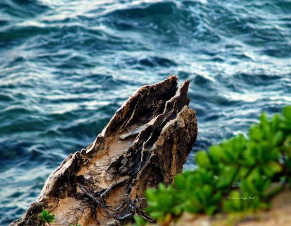 Nature's Sculptures VII