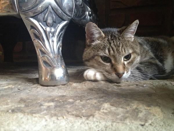 Mighty Cat