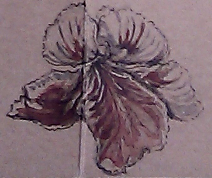Red and White Geranium Watercolor