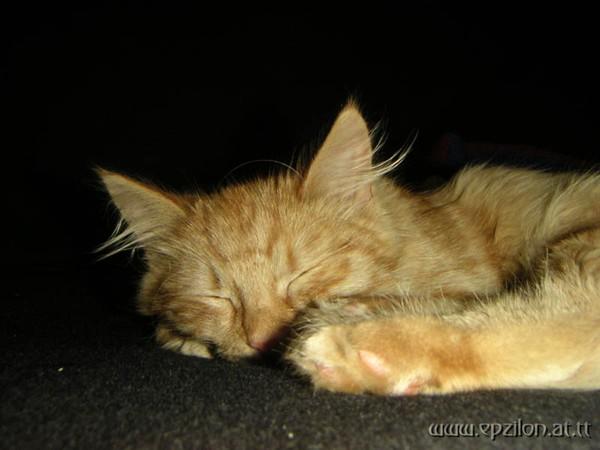 Sleeping Callisto