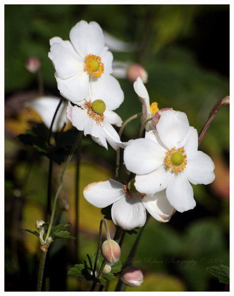 Fiori in fioritura