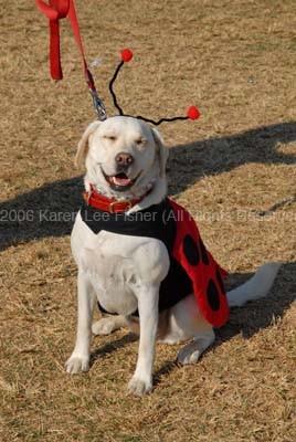 Smiling Dog on Halloween