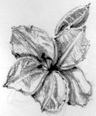 Azelea Sketch