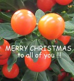 MERRY XMAS TO ALL OF YOU!!