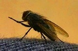 Fly on my Jeans
