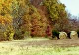 Colors on a Farm