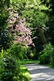 A TOUCH OF PINK  AMONG THE GREENERY
