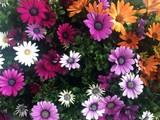 Flowers no 4