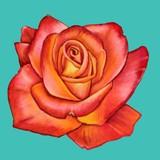 Delicate Orange Rose