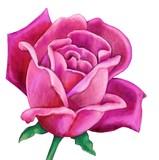 Simple Pink Rose