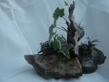 by Pedra Viva mini jardins