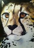by Kenya Ferrand-Ott