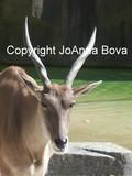 by JoAnna Bova