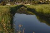 Alhambra Creek at Dawn - June 2019