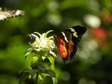 12 09 Butterflies 121