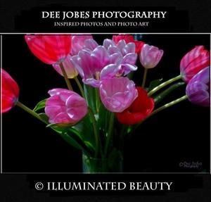 DEE JOBES PHOTOGRAPHY Portfolio