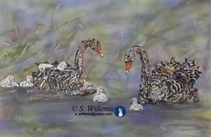 Swans Australian bird Art Susan Willemse
