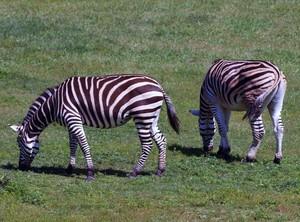 Zoo / Exotic Animals
