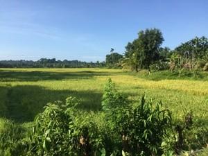 Greenish picture taken on Andaman