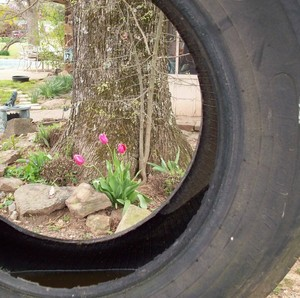 Tulips  as seen through a tire swing!