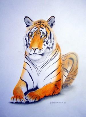 Tiger 2017