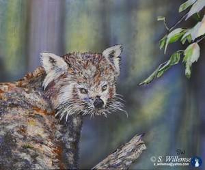 Red Panda Wildlife Art Susan Willemse