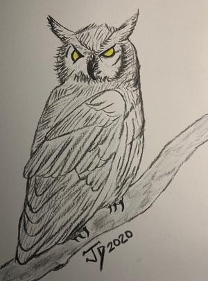 Hoot Owl 1