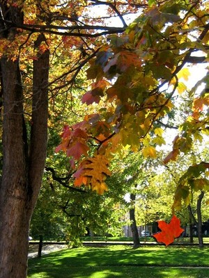 Autumn In The Park (Fourteen)