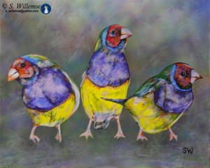 Red headed Gouldian Finches Art Australian Birds Susan Willemse