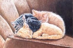 Kitten Slumber
