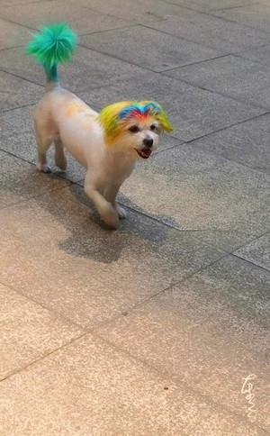 A Dog Girl