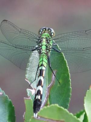 Dragonflies 2011