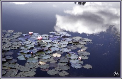 A Glow of Lilies