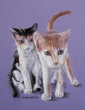 Brat Cats