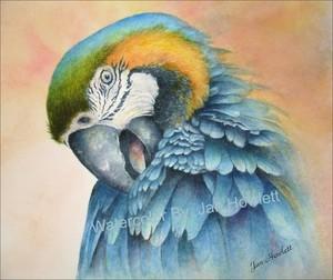 Lady Bird-Blue Macaw